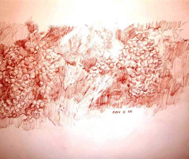 Dibujo a sanguina de una cepa de uvas