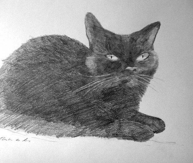 Dibujo a lápiz de un gato