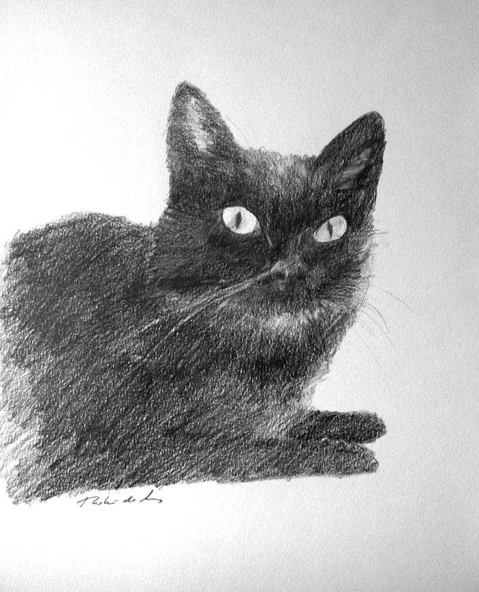 Un retrato de un gato dibujado a lápiz
