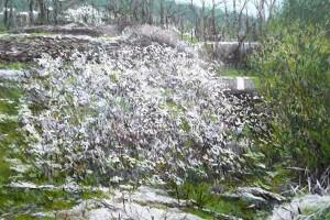 Espinos en flor