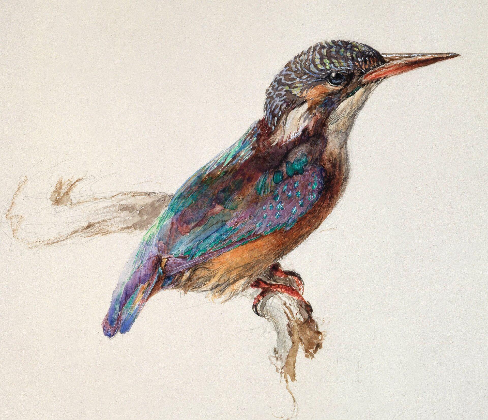 El talento de John Ruskin, acuarelas y dibujos