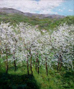 Paisaje de unos cerezos en flor en el Valle del Jerte
