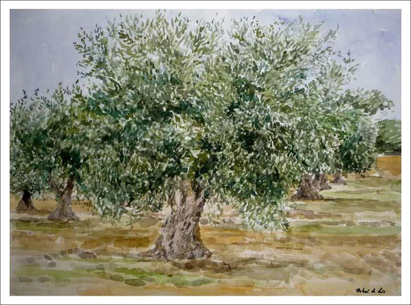 El olivo, acuarela